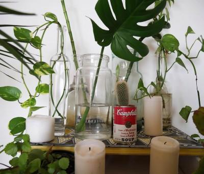 Mobles pintats i plantes